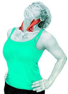 Estiramientos: Guia básica ilustrada de estiramientos. – Gimnasio Rizo Scoliosis Exercises, Body Stretches, Stretching Exercises, Yoga Movement, Health And Fitness Tips, Workout Videos, Yoga Fitness, Athletic Tank Tops, Women
