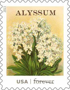USPS-vintage-seed-packet-stamps-alyssum
