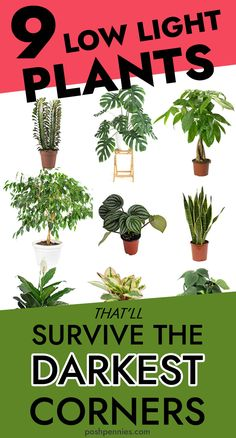 9 Most Gorgeous Low Light Plants For Indoors these are 9 of my favorite low light plants for a dark home. I live in a dark apartment so I have had to learn all about low light indoor plants. these are beautiful and require almost no care! Indoor Plant Lights, Indoor Plants Low Light, Plant Lighting, Best Indoor Plants, Artificial Light For Plants, Low Light Houseplants, Indoor Plant Decor, Indoor Shade Plants, Indoor Trees