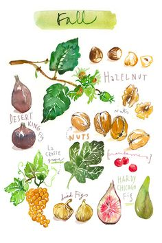 Fall Fruits by Lucile Prache is printed with premium inks for brilliant color and then hand-stretched over museum quality stretcher bars. Money Back Guarantee AND Free Return Shipping. Watercolor Fruit, Fruit Painting, Watercolor Flowers, Recipe Drawing, Grand Art, Pinterest Instagram, Fall Fruits, Fruit Print, Fruit In Season