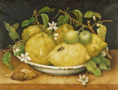 Giovanna Garzoni | Still Life with Bowl of Citrons, late 1640s, tempera on vellum, 27.6 x 35.2 cm, J Paul Getty Museum