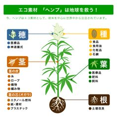 Natural Medicine, Hemp, Wallet, Health, Nature, Naturaleza, Health Care, Natural Home Remedies, Nature Illustration