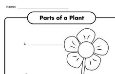 Potato plant growth sequencing worksheet (SB9782