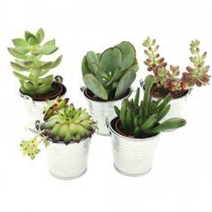Mini plantes vertes interieur for Mini plante verte