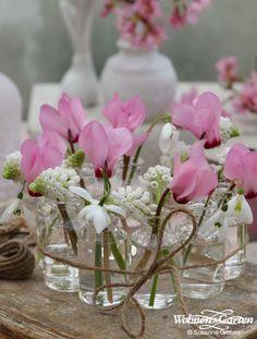Nicht nur auf der Fensterbank eine Zier: Die zarten Blüten ergeben auch eine wundervolle Tischdekoration (Foto: WG/Susanne Grüters)