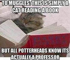 Just imagine it though... McGonagall reading the hp series and just laughing her head off when she gets to get own description because they got it completely wrong!