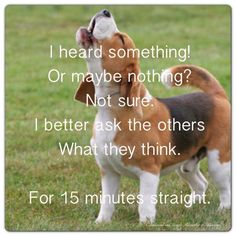 This would be our Beagle at about 3 in the morning right outside the bedroom window!!