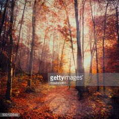 Stock Photo : Germany, Wuppertal, deciduous forest in autumn against the sun