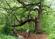 140522_SCI_KidsNature_tree