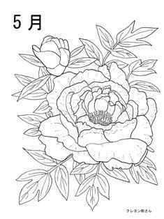 5月牡丹の花の塗り絵の下絵、画像