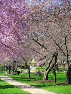 Brandywine Park Wilm DE  Photo by Elaine Kucharski