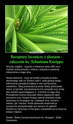 Cactus Plants, Natural Remedies, Nature, Naturaleza, Cacti, Cactus, Natural Home Remedies, Nature Illustration, Off Grid
