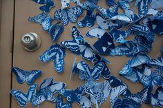 cyanotype butterflies