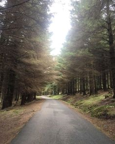 Ticknock Forrest is located in the Dublin Mountains. This beautiful National Park offers up to 10 km of mountain and forest walks with some spectacular view Dublin Bay, Where The Heart Is, Ancestry, Walks, Diaries, Exploring, National Parks, Country Roads, Adventure