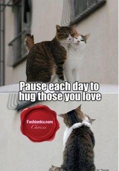 Hugs are universal ~ Purr World