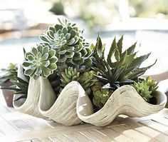 love the succulents in this large shell