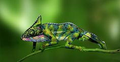 This Chameleon Is Actually Two Painted Women | Bored Panda