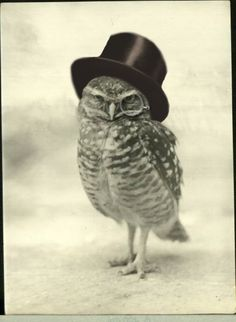 Vintage owl drawing with a black hat on