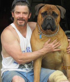 Fabullous Bullmastiffs ... My breeder of choice! This is Magnum, my Betty's son. When they retired BettyBoops we adopted her. If you luv Bully's, check them out!