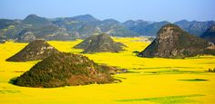 """10 of the Most Colorful Places On Earth via @PureWow LUOPING, CHINA The sprawling farmlands of this dramatic, mountainous county in Eastern China become a """"golden sea"""" when canola blooms are in season."""