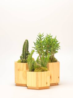• Hexagonal planter set, handmade from sustainable pine wood and reclaimed plywood • Exterior finished with FDA-approved food-grade oil and organic beeswax • Interior waterproofed with epoxy. Drainage holes can be added at no extra cost • Whole set measures W: 15, D: 9, H: 4.25. (plants not included) • Custom orders available if you would like larger dimensions  Plant a lush little garden in these perfect pots - the hexagonal shapes sit neatly together to create a stylish, ultra-modern…