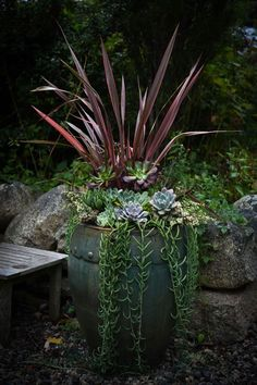 Container with gorgeous succelents courtesy of Margaret Roach at Away to Garden