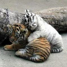 For a double dose of cute, roll out the big cat photo.