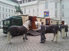 The Spanish Riding School Stallions are preparing to hit the road and start their journey to Malmo, Sweden
