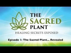 """Welcome to the first episode of the eye-opening documentary series """"The Sacred Plant: Healing Secrets Exposed"""". This episode is entitled: The Sacred Plant. Alternative Health Care, Alternative Medicine, Health And Nutrition, Health And Wellness, Sacred Plant, Cancer Cure, Beat Cancer, Health Articles, Medical Marijuana"""
