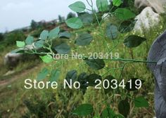 1PCS Artificial banyan tree leaves with stem fake slik plants for Wedding Party Home Decoration gift craft DIY CN post #Affiliate