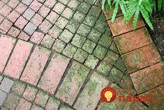 Algae, lichens, liverworts and moss on hard surfaces Garden Stones, Garden Paths, Brick Sidewalk, Clean Concrete, Clean Patio, Brick Path, House Cleaning Tips, Cleaning Services, Cleaning Products