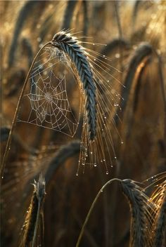 So simple, yet, so spider web on the grass of autumn! Love the photography! <pin by Karia Jackson on Autumn