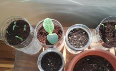 """""""As my former aloe plant can attest, I'm not a natural green thumb. Unfortunately, plants can't subsist on zeal and misguided confidence (yet!). After several sad years of seedlings that never came be, I took a look inside myself—and gardening message boards—and realized that in all of my enthusiasm, I was over watering. """"  Smart Girl Lisa Herring shares this DIYes! post for self watering plastic bottle planters!"""