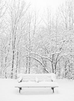 winter photo ... white on white on white ... abandoned bench ... trees dressed in clouds of snow ...