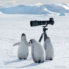 3 up and coming polar photographers and Nikon lovers!