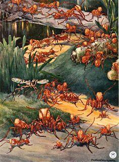 Art of the Living Dead Scott Thomas, Reptiles, Live Animals, Scientific American, Animal Species, Ants, Creepy, Entertaining, Empire