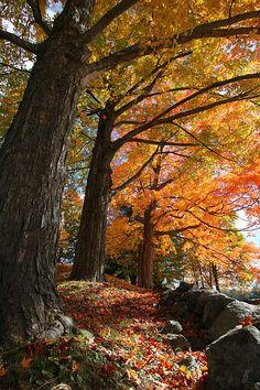 Emery Farm Trees Fall Foliage