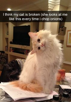 19+ Funny Cat Snapchats That You Need To See Right Meow... CLICK for MORE!