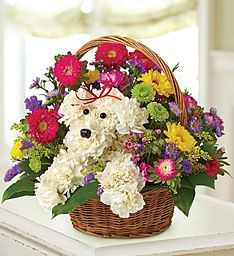 a-DOG-able® in a Basket