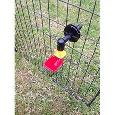 Small Auto Cup Drinker for Poultry / Chicken /Chick Cage Hatching eggs Automatic Chicken Chick, Small Cars, Poultry, Cage, Backyard Chickens, Miniature Cars