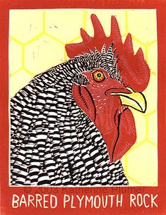 Barred Plymouth Rock, lino print by Katherine Plumer