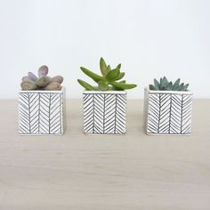 Seriously?  How cute for a kitchen windowsill, a desk, or really...anywhere?!?  Love these succulent planters!