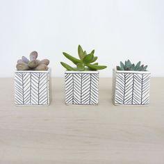 Mini Herringbone Plant Cube   dotandbo.com