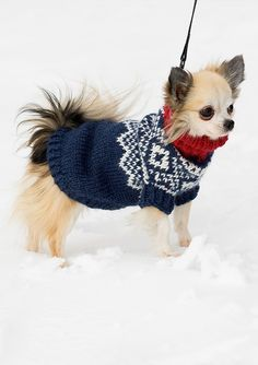 I just made one of these for a friends Dachshund - it is so cute :) Pet Sweaters, Cable Knitting Patterns, Real Style, Knit Mittens, Dachshund, Winter Hats, Pets, Crochet, Julie Ann