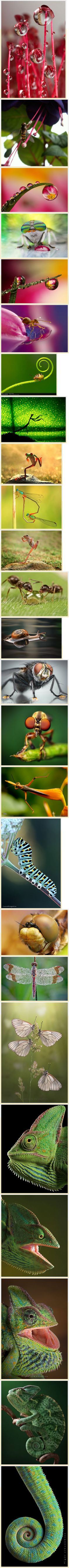 #Macro #Insects #Photography