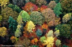 Aerial view of the autumn colours on Lingmoor Fell, The Lake District, Cumbria