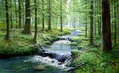 A shallow stream flows through a forest of evergreen trees in this wallpaper mural. Sunshine peeking though pine branches reflects off the slowly moving water. Secret Garden Book, Murals Your Way, Wall Murals, Wall Decal, Serenity, Beautiful Places, Beautiful Paintings, Beautiful Pictures, Scenery