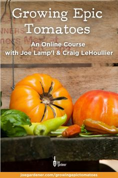 Tomatoes are one of the most loved crops that gardeners grow, but they are also the most challenging. Learn to grow epic tomatoes with gardening educator and tomato growing experts, Joe Lamp'l and Craig LeHoullier in this online course. | #gardeningcourses #grow tomatoes #howtogrowtomatoes #epictomatoes Tomato Plant Care, Tomato Seedlings, Grow Tomatoes, Gardening Courses, Good Environment, Good Morning America, Grow Your Own Food, Green Life, Online Courses