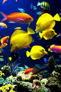 Tropical Fish one of the best schools around
