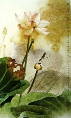 traditional chinese painting of fine brushwork  http://www.360doc.com/content/11/1206/15/0_170129714.shtml  名家工笔荷花欣赏